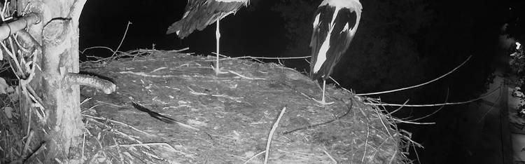 Livecam El Arenal - Strand - Mallorca